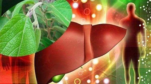 cây thuốc an xoa, Cây thuốc an xoa – Thần dược trị bách bệnh bao gồm cả ung thư