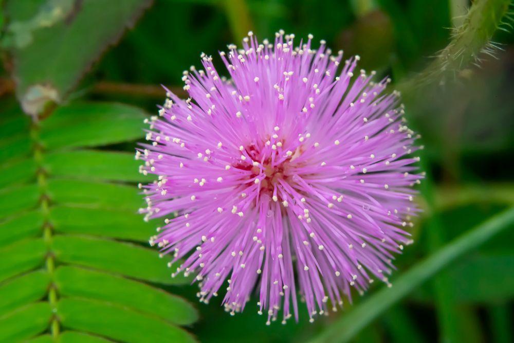 cây thuốc Nam chữa bệnh tê tay