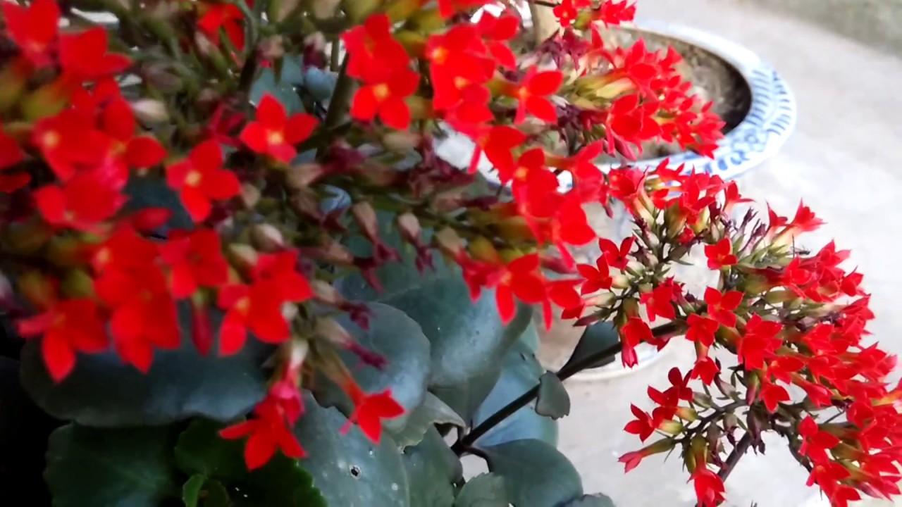 Các loại cây thuốc Nam dễ trồng